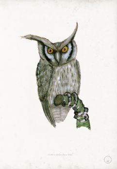 Northern White Faced Owl - artist signed print